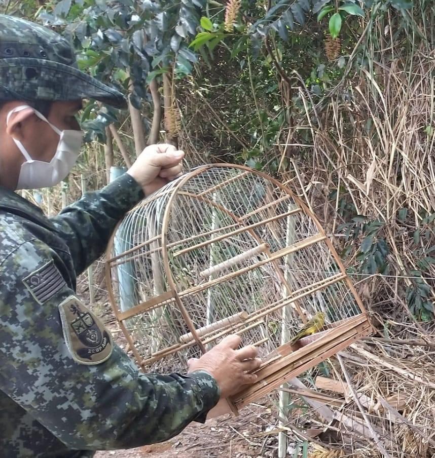 Foto: Polícia Militar Ambiental/ Divulgação